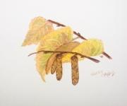 Autumn Promise