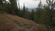 Arstein Yellowstone and Grand Tetons-19