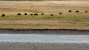 Arstein Yellowstone and Grand Tetons-7