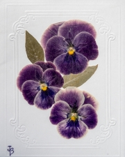 Note Cards-5